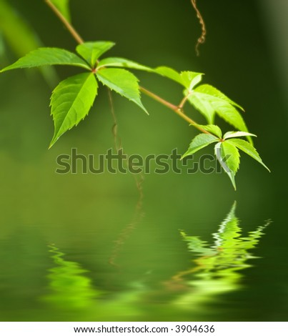 Green leaves reflected in rendered water - stock photo