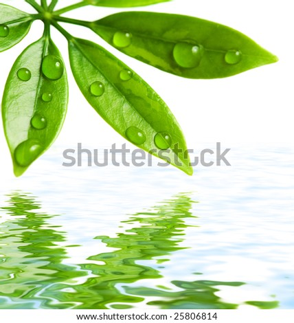 Green leaves reflected in water - stock photo