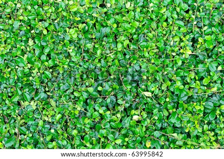 Green leaves seamless background - stock photo