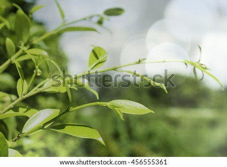 green leaves, shallow focus leaves, green, closeup, tree, maple, light, macro, forest, color, outdoors, lush, plants, background, foliage, spring, organic, bright, summer, woods, abstract, growth,   - stock photo