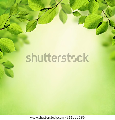 Green leaves summer or spring background - stock photo