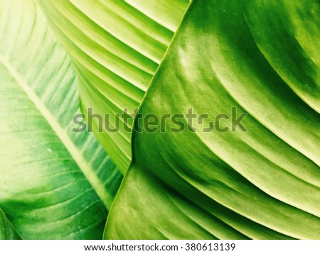 Green leaves texture, abstract pattern background. - stock photo