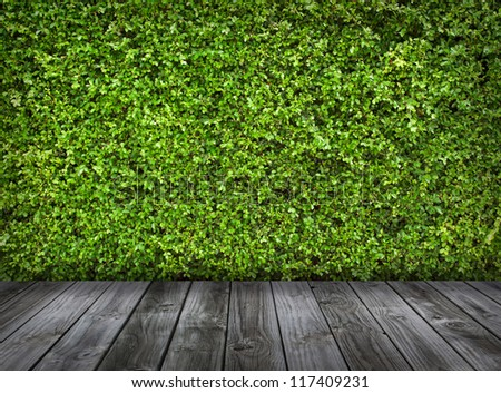 Green leaves wall and old wood floor for background - stock photo