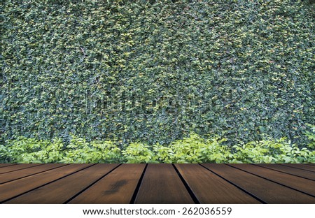 Green leaves wall and wood floor  background - stock photo