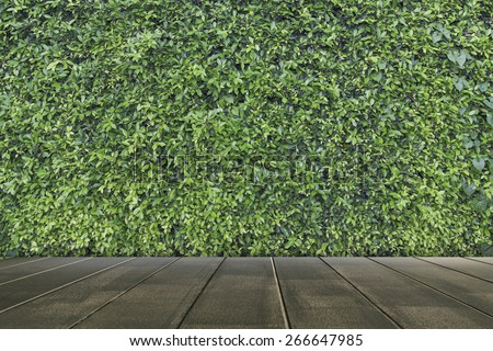 Green leaves wall and wooden floor texture - stock photo