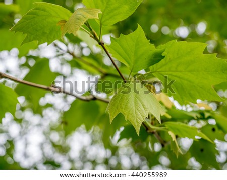 Green leaves with background bokeh in summer season