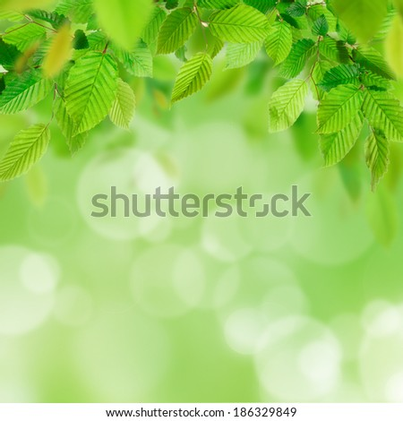 Green leaves with blur bokeh