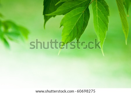 green leaves with blurry background - stock photo