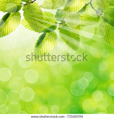 Green leaves with natural background - stock photo