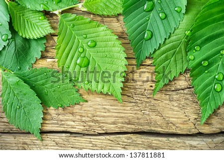 Green leaves with rain drops - stock photo