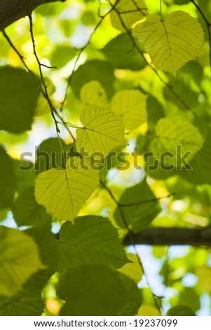 green leaves with shallow focus