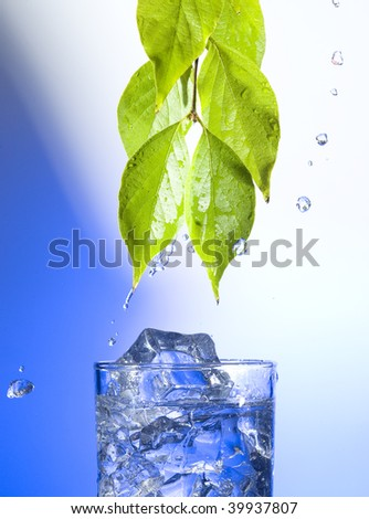 Green leaves with splashing water