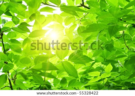 Green leaves with sun ray - stock photo