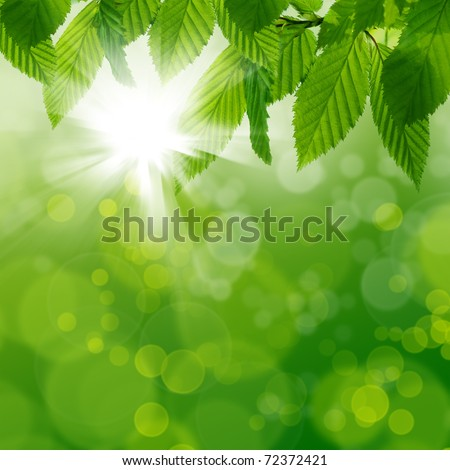 Green leaves with sunlight