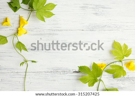 Green leaves with wild yellow flowers on wooden background - stock photo