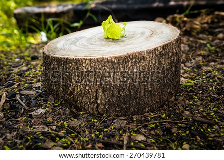 Green leaves with wood stump. New development and renewal as a business concept - stock photo