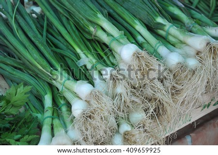Green Leek (Allium ampeloprasum) vegetables vegetarian food