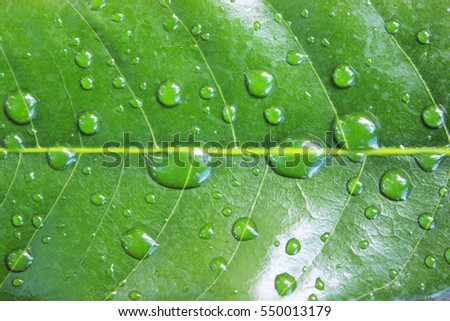 Green left with water drop, Natural beauty.