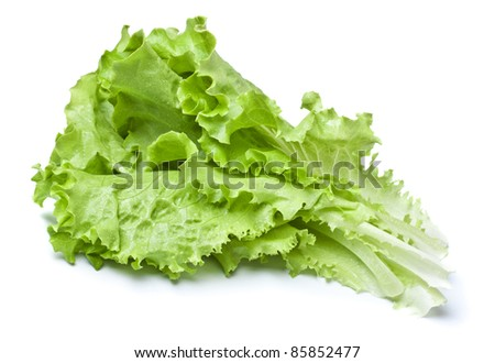 Green Lettuce - stock photo