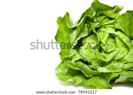 green lettuce and empty space for your text - stock photo