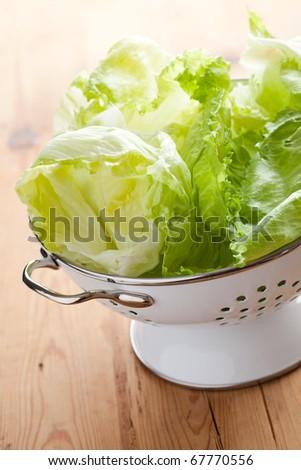 green lettuce in colander - stock photo