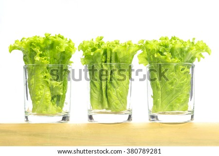 green lettuce in small glasses setting on bamboo tube