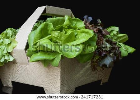 Green lettuce in the basket in black background - stock photo