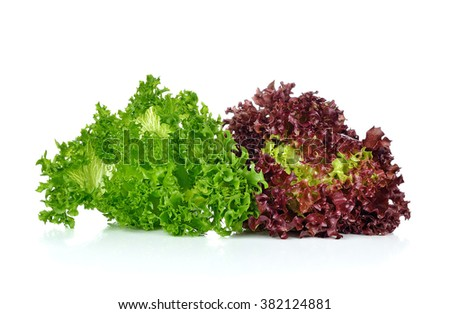Green lettuce salad and red coral isolated on white background. - stock photo