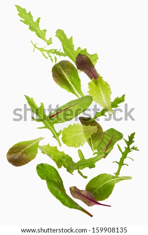 Green lettuce salad leafs isolated on  white - stock photo