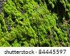 Green lichen - stock photo