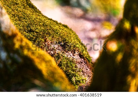 Green lichen moss plant grow on tree wood forest close up