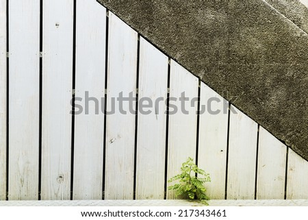Green life by the wall. - stock photo