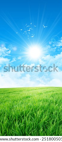 Green like a meadow in the sun. Fresh field of green grass growing slowly under the rising sun. White birds fly up high