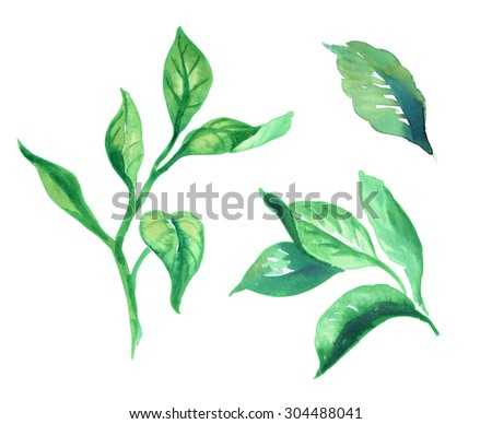 green lilac leaves, watercolor floral illustration on white background, isolated design elements - stock photo