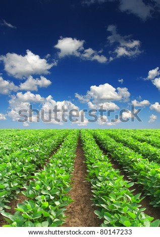 Green lines on field. - stock photo