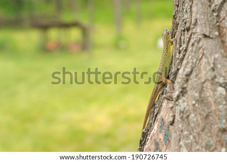 Green lizard crawling across the bark on the trunk of a tree in a garden or park with copyspace - stock photo