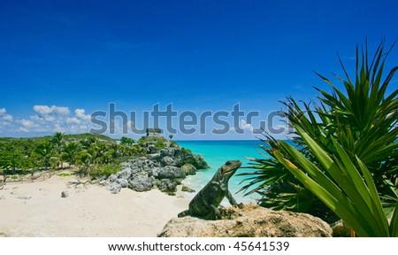 Green lizard Iguana sunbathing on a rock in front of Caribbean sea at Tulum in Mexico, Riviera Maya - stock photo
