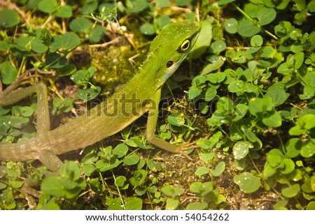 green lizard in grass camouflaged - stock photo
