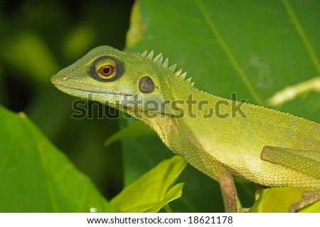 green lizard in the parks