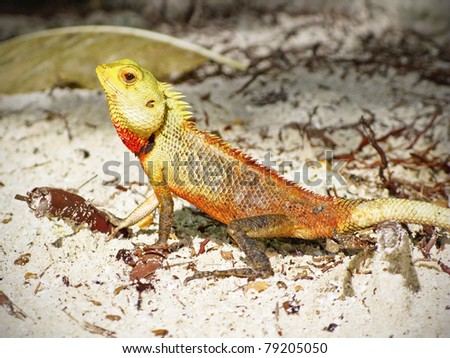 green lizard in the sand - stock photo