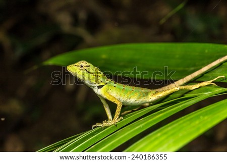 Green Lizard on a leaf - stock photo