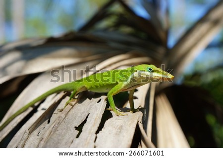 Green lizard on palm branch - stock photo