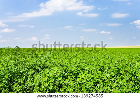 green lucerne field under blue sky in France - stock photo