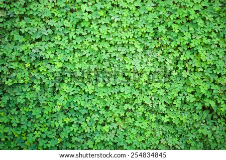 Green lush clover in the spring - stock photo