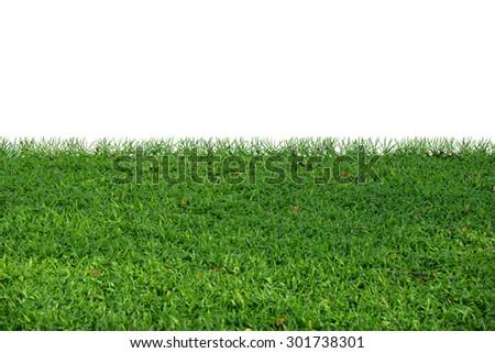 Green lush lawn - stock photo