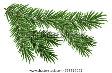 Green lush spruce branch. Fir branches - stock photo
