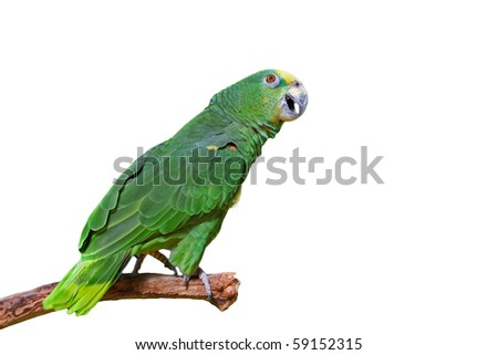 Green macaw parrot talking - stock photo