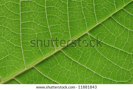 green macro leaf - stock photo
