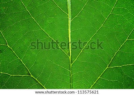 Green macro leaf - background texture - stock photo