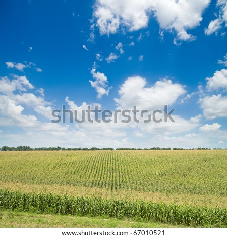 green maize field under blue sky and clouds - stock photo